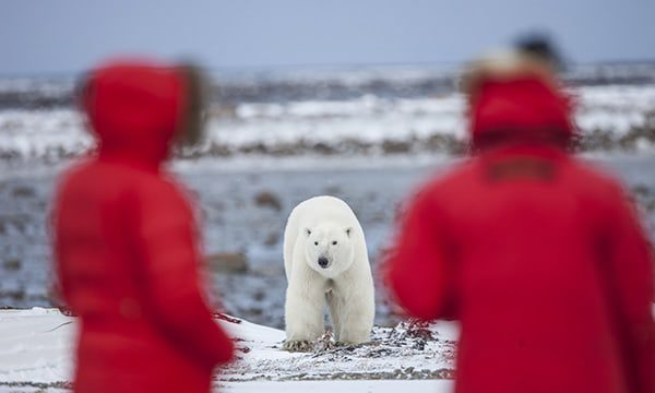 Why not become a guide in the Antarctic?